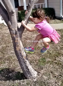 Climbing on the tree.  :)