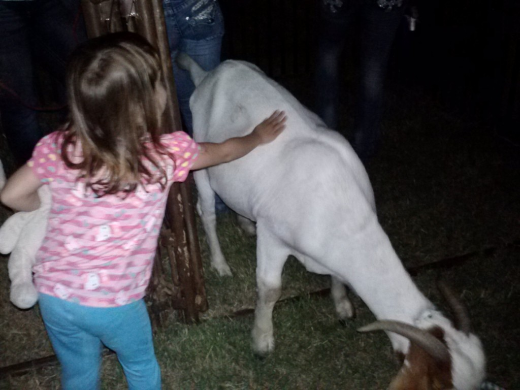 Petting the goat.