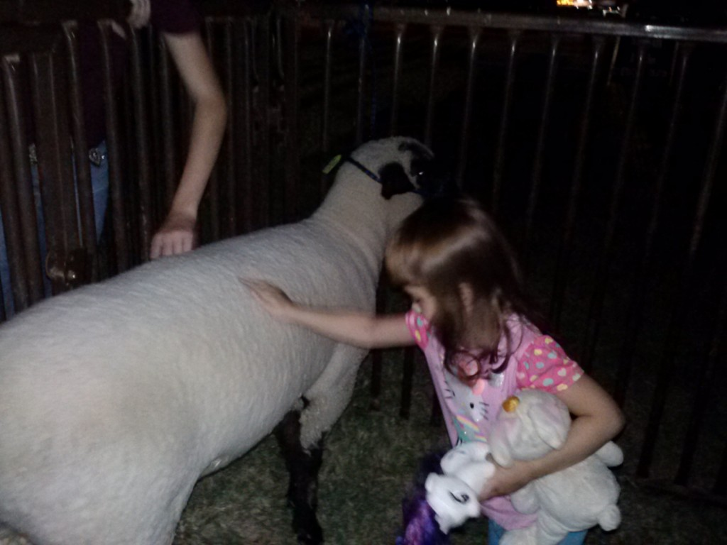 Petting the sheep.