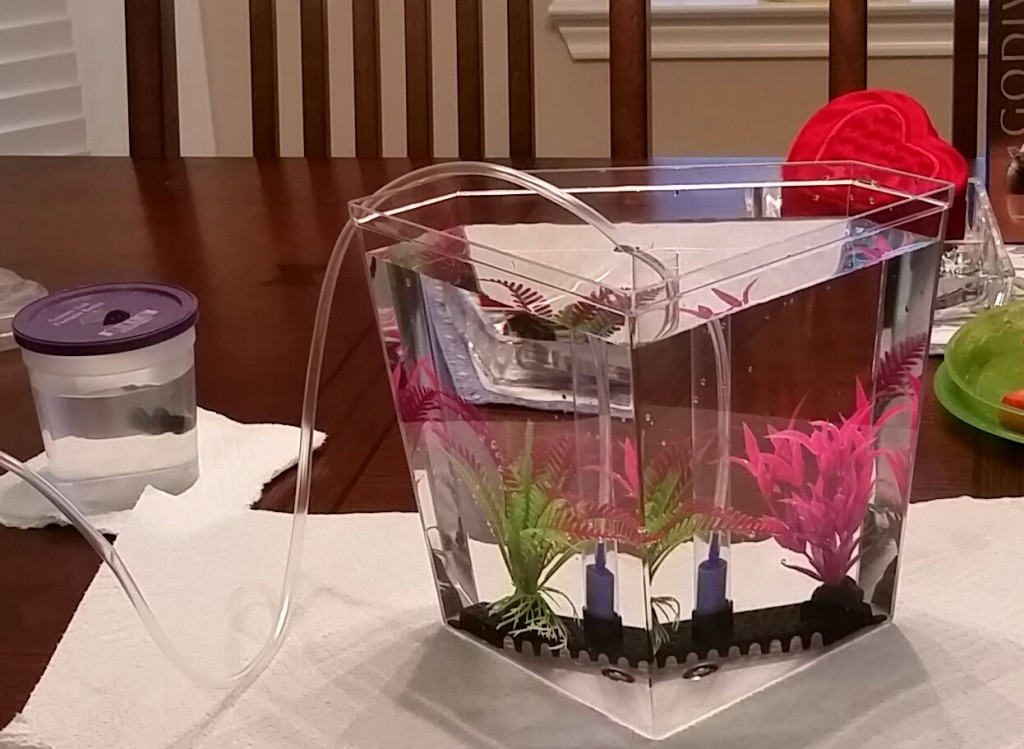 Assembling the acrylic fish tank for the Betta fish.